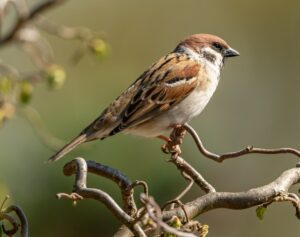 bird removal in maryland